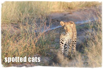 Northern Botswana Safari