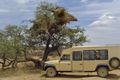 See fascinating sights such as this massive Sociable weaver nest whilst you travel in the comfort of your safari vehicle.